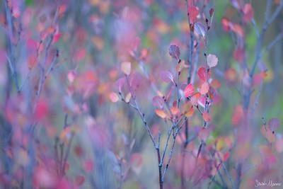 Favorite Color Photographs