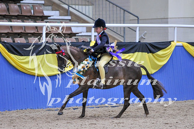 Class 10 Childs Med Show Pony