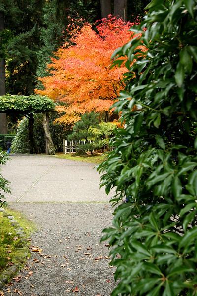 Portland Japanese Garden  11-11-11  3556.jpg
