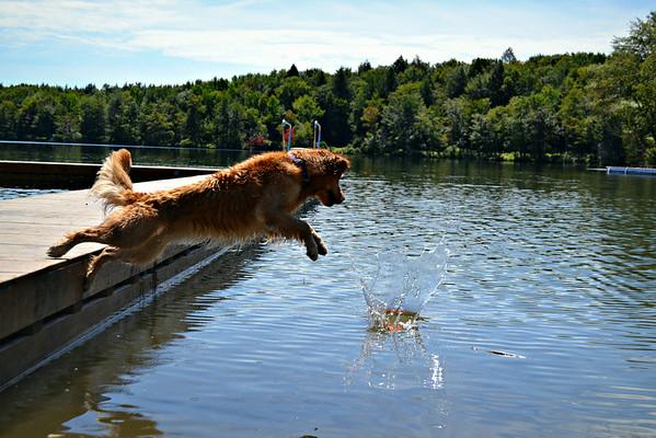 Dock diving!