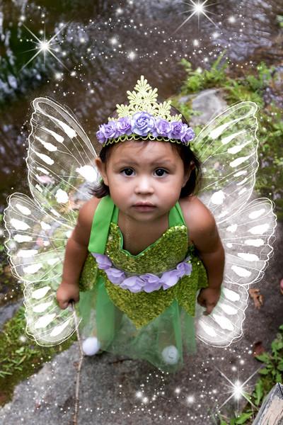 795A1882 fairy.jpg