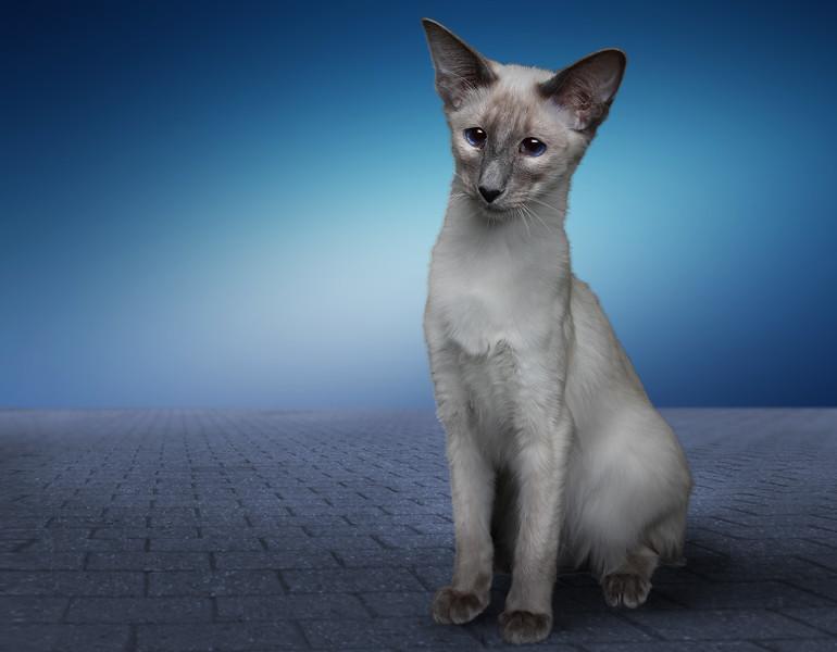 Saule-cat-1.jpg