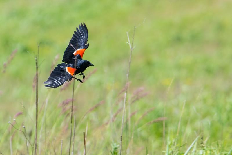2019.06.07-Birds-08.jpg