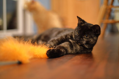 Cat cuteness.