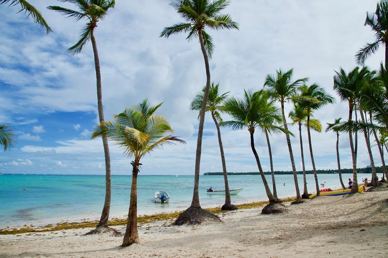 Caribbean Palm Trees Punta Cana DR.jpg