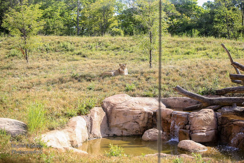 2016-07-17 Fort Wayne Zoo 143LR.jpg
