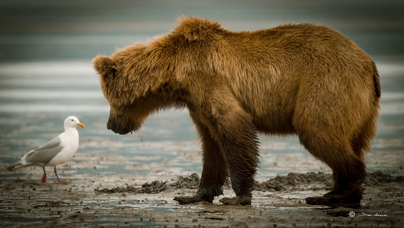 Alaska 10.jpg