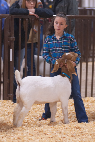 kay_county_showdown_goats_20191207-115.jpg