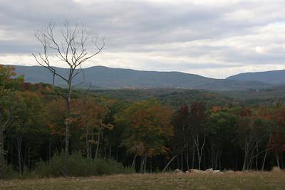 2008-10-04 Leaves
