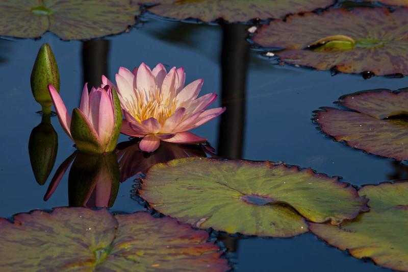 Botanicgarden11 212.jpg
