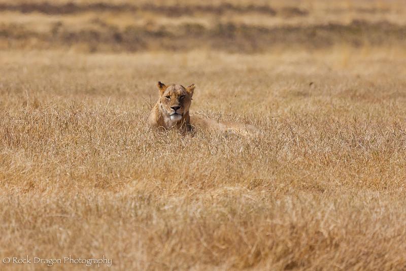 Ngorongoro-32.jpg