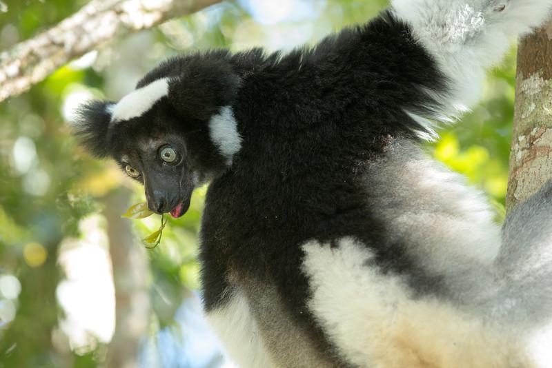 Madagascar_2013_FH0T9466.jpg