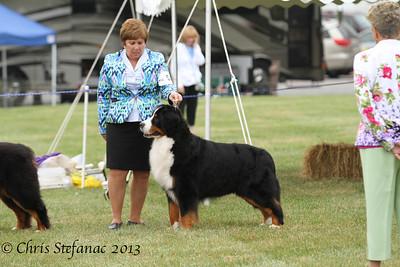 7-9 yr Veteran Dogs 10/6/13