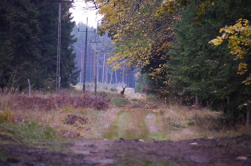 2008-10-22 15-01-31.jpg