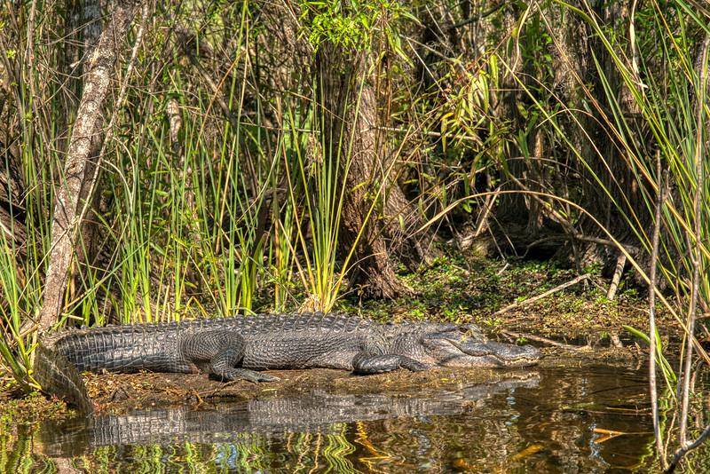 Everglades 2020-14.jpg