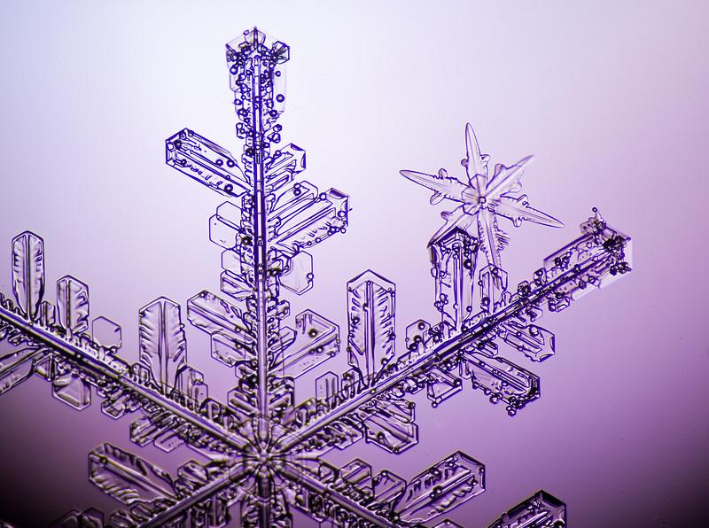 Snowflake-0667-Edit.jpg