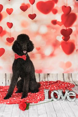 Tricia Valentines 2020