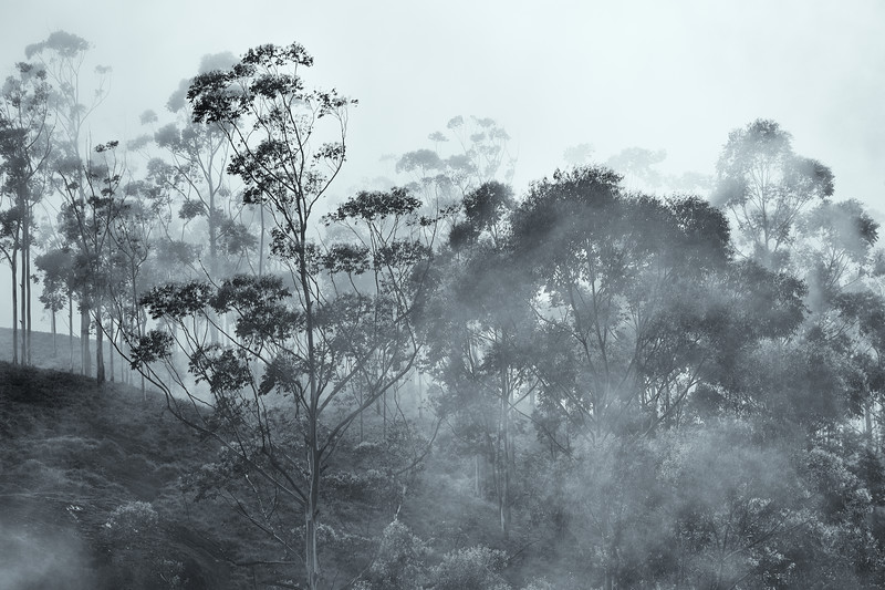 Trees and Fog #3 - Smoke