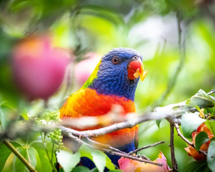 121818  birds  _11.JPG