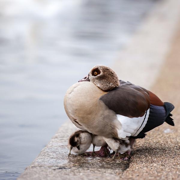 Kensington Gardens - Round Pond