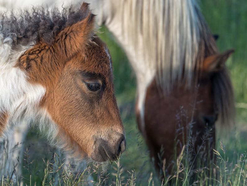 219 Jun 16 2019 Grayson Highland Foal minus spot-1.jpg