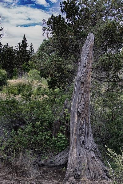 Trees & flowwers