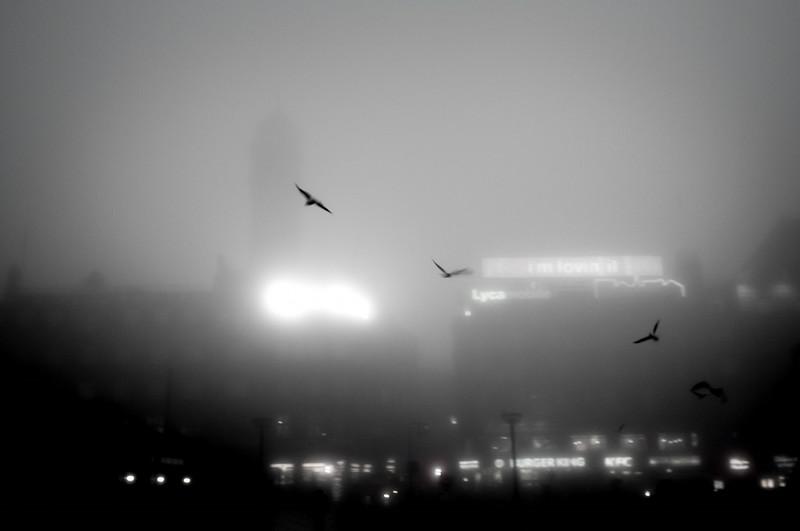 Birds in the morning fog