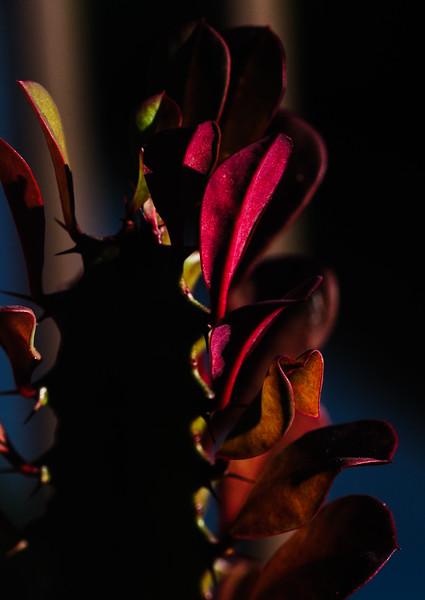 Cactus-5491.jpg