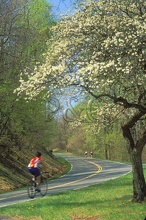 VIRGINIA - SHENANDOAH NP - SKYLINE DRIVE / BIKING