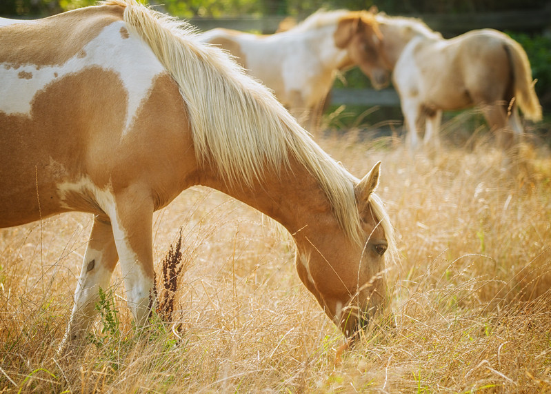 Wild Horses-.jpg