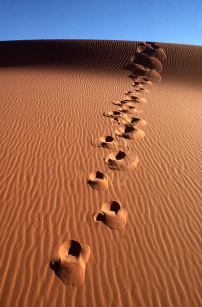 Coral Pink Sand Dunes - frank-jensen - KCOT.jpg