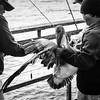 Pelican Rescue 2