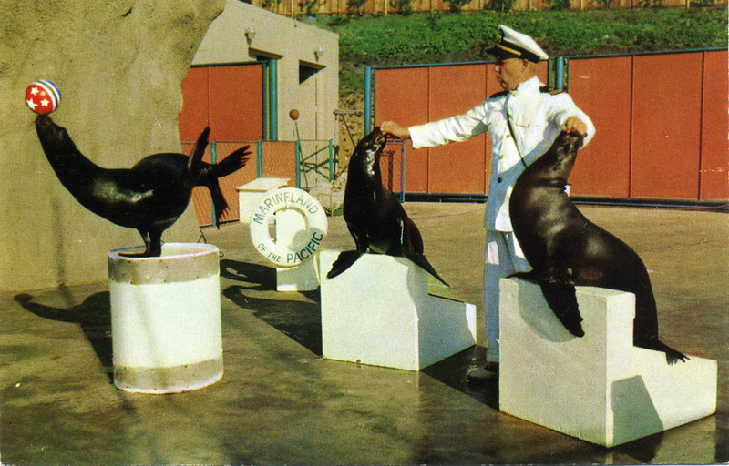 Marineland Seal Circus