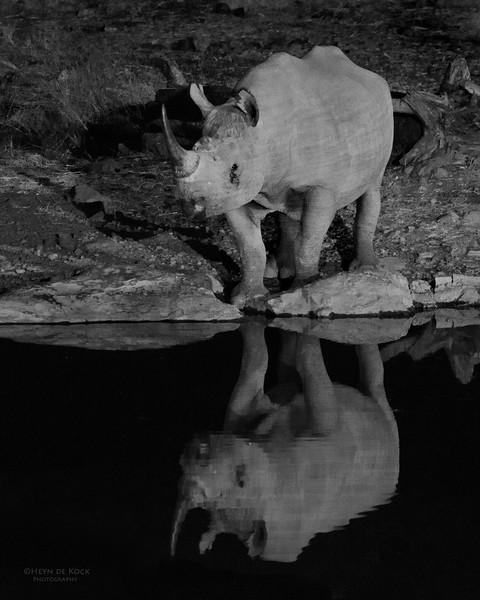 Black Rhino, Etosha NP, Namibia, July 2011.jpg