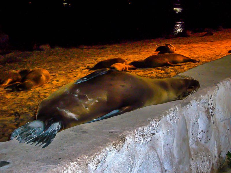 seal sleep.jpg