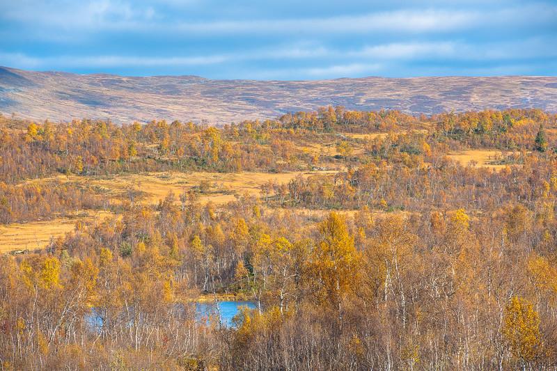 Stekenjokk Swedish lapland