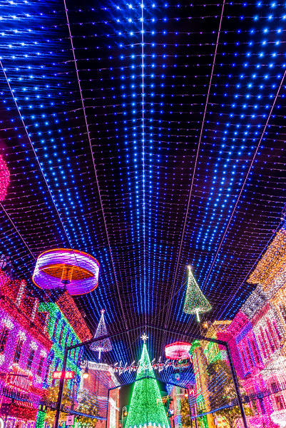Osborne Lights - Under The Canopy