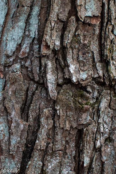 bark 021613-4.jpg