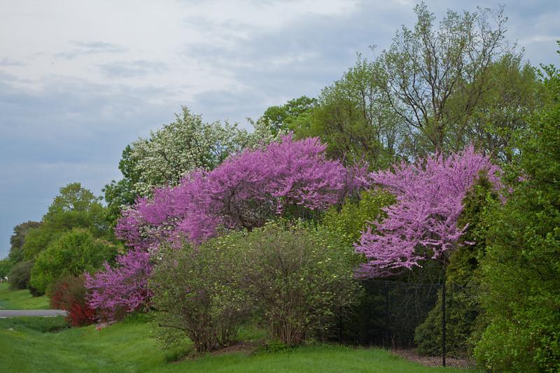 Spring13-0377.jpg