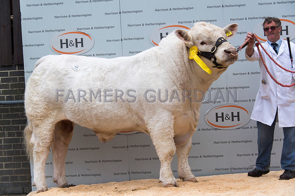 Charolais and Blondes H&H May 2017