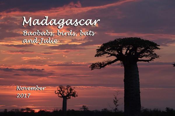 Madagascar: Baobabs, Birds, and Bats