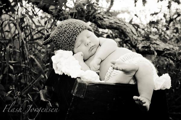 Baby Dane (2 weeks old)
