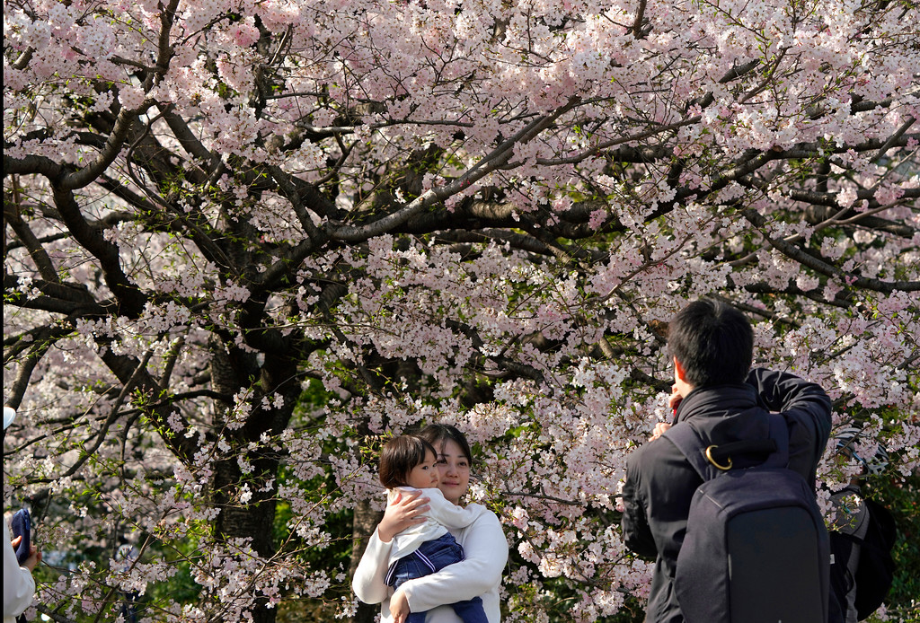 . A family takes a picture of cherry blossom flowers at full bloom at Chidorigafuchi in Tokyo, Monday, March 26, 2018.  Japan\'s famous cherry blossoms have reached full bloom in Tokyo as spring-like weather descends on the nation\'s capital. (AP Photo/Shizuo Kambayashi)