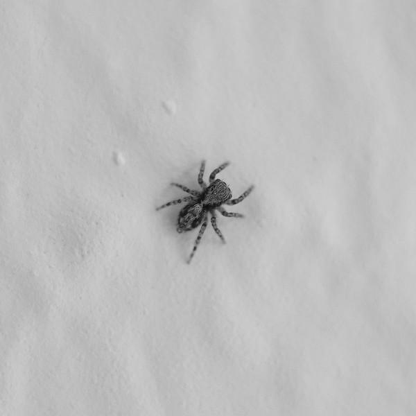 Spinnchen auf Raufasertapete