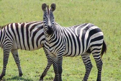 1494239977African-Safari-65.jpg