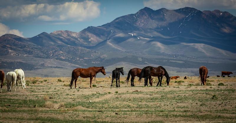 Onqui horses 222.jpg