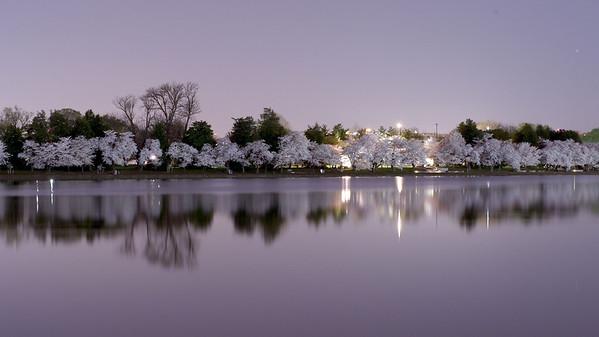 Tidal Basin - Cherry Blossoms 2010