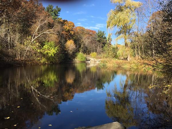 Spectacular Autumn in High Park (November 2016)