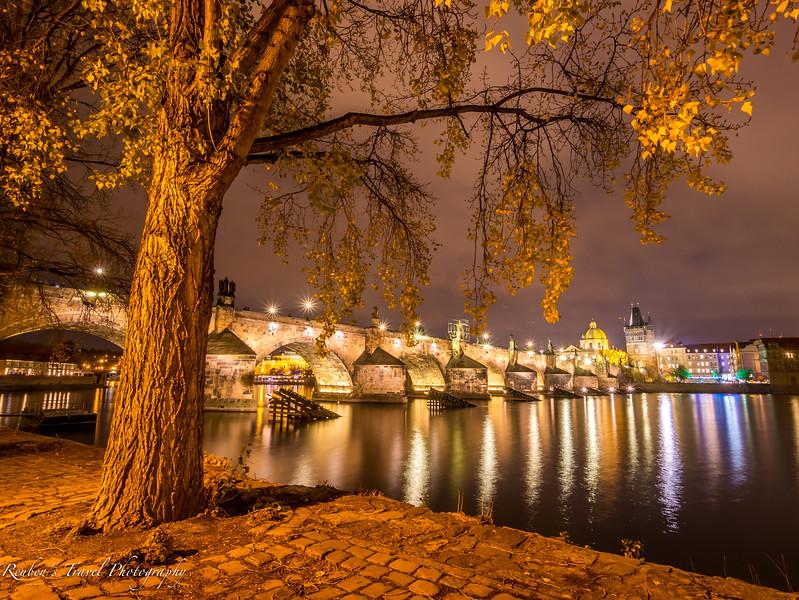 HDR Charles bridge Tree at night.jpg