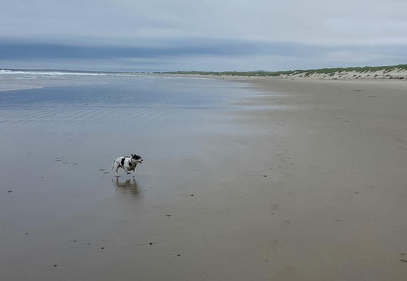 Beach walk with Mattie (18 of 20).jpg